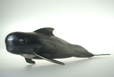 Short-finned Pilot Whale (object) detail